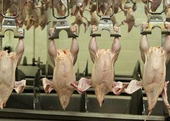 В Татарстане начато строительство самого крупного в РФ комплекса по переработке мяса птицы
