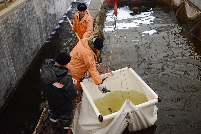 комплекс по выращиванию рыбы осетровых пород