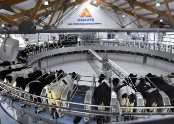 Молочный комплекс на 4600 голов открылся в Тюменской области