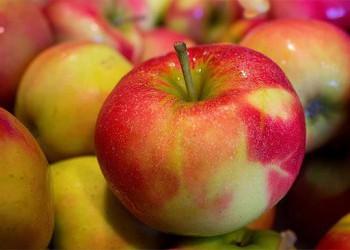 В Адыгее побит рекорд по сбору урожая