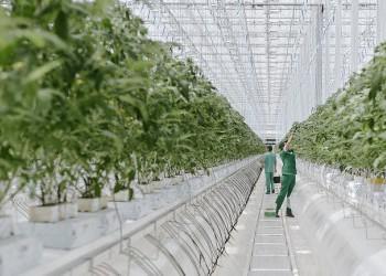 В Воронежской области открыли тепличный комплекс 5-го поколения