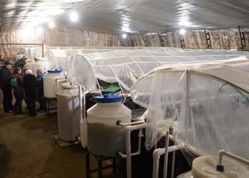 Ферма по разведению креветок открыта в Калужской области