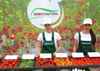 На Ставрополье открыт крупный тепличный комплекс