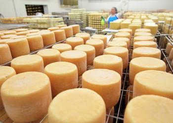В Ленинградской области открылось новое предприятие по производству итальянских и кавказских сыров