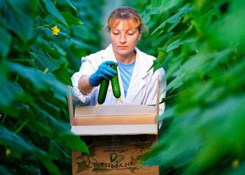 Россия резко увеличила экспорт овощей