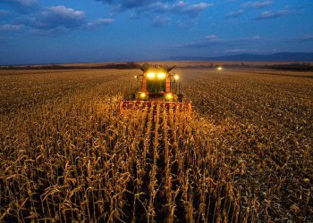 В Кабардино-Балкарии вывели новые гибриды кукурузы, которые созревают в рекордно короткие сроки