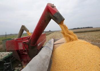 Объем экспорта российской кукурузы в 2016/17 гг. превысил 4 млн. тонн — Минсельхоз