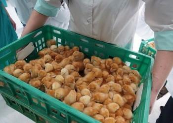 Новый корпус птицефабрики «Новороссийск» запущен в Краснодарском крае
