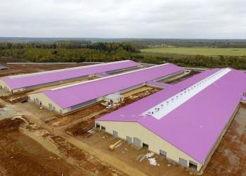 Молочный комплекс на 4000 голов открылся в Подмосковье