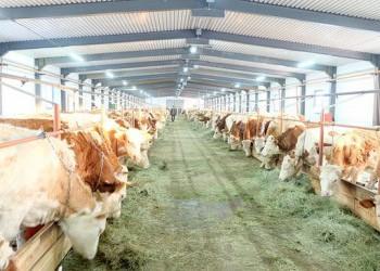 В Якутии открыли животноводческую ферму