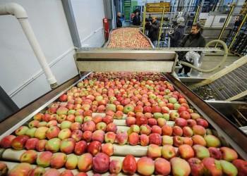 В Воронежской области открыли фруктохранилище на 5 тысяч тонн