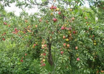 В Тамбовской области создается крупный садоводческий комплекс «Сады Мичурина»
