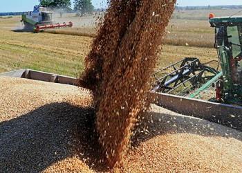 Урожай зерновых в 2017 году составил 134,1 млн. тонн