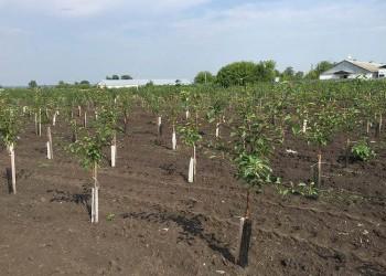 В Тамбовской области заложили за год более 900 гектаров многолетних насаждений