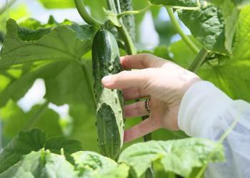 Российские ученые вывели и запатентовали 858 новых сортов растений с начала 2017 года
