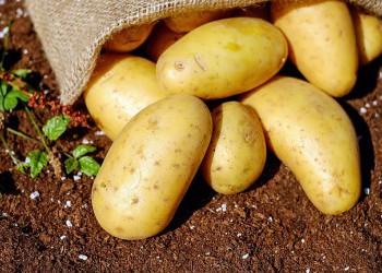 Россия в два раза уменьшила импорт картофеля