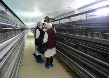 В Сахалинской области открыли первую в регионе перепелиную ферму