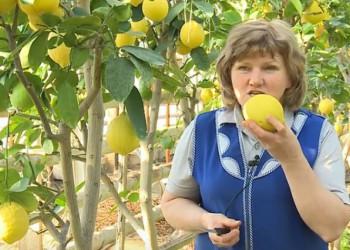 Выведенный в Челябинской области сорт лимона получил золотой знак качества