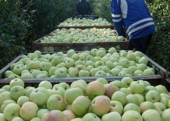 В Самарской области ГК СИНКО развивает садоводческое предприятие «Сургутское»