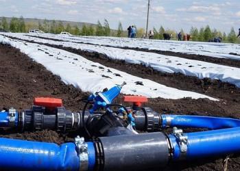 В Самарской области заложена новая плантация садовой земляники под капельным орошением