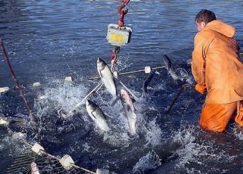 С начала 2018 года вылов рыбы вырос на 3,7%