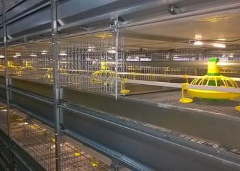 В Ставропольском крае открыта птицефабрика мощностью 5 млн голов