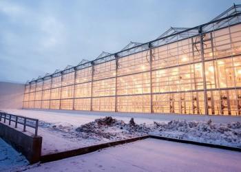 Первая очередь тепличного комбината «Толмачевский» запущена в Новосибирской области