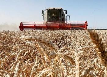 Россия увеличила экспорт пшеницы почти на 30%