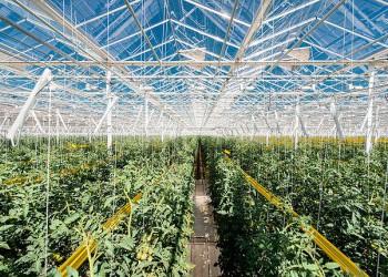 «Долина овощей» завершила строительство пятой очереди теплиц в Липецкой области