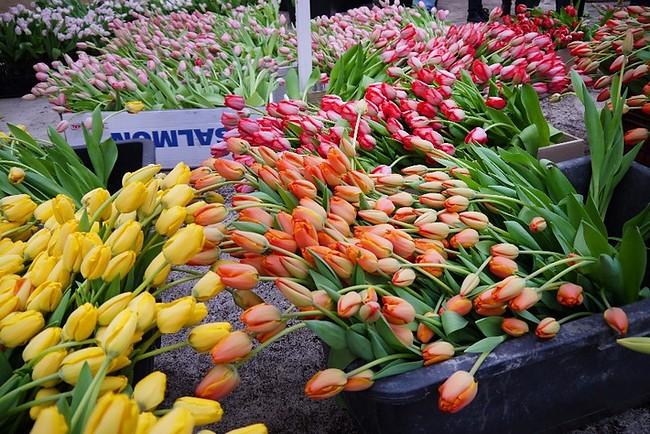 производство цветов