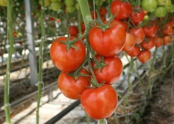РФ к 3 мая увеличила сбор тепличных овощей на 17,7%